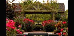 5 Tahap Membuat Taman Bunga Mawar di Rumah