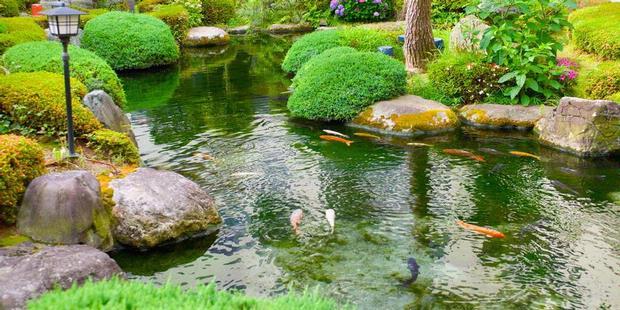batu koral untuk kolam ikan | Property Investment Planner & Premium