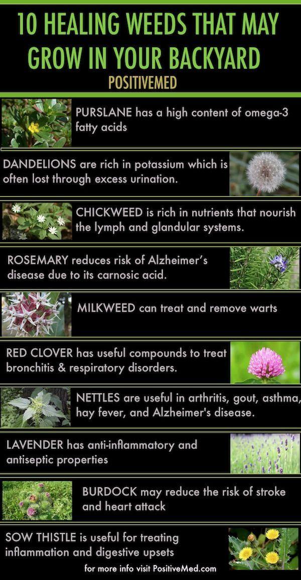 Tanaman Obat Yang Bisa Tumbuh di Halaman Belakang - Infografis - BeliSewaRumah