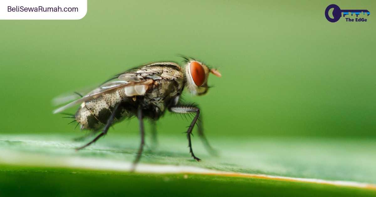 Cara Alami Menyingkirkan Serangga-Serangga Ini Dari Rumah - BeliSewaRumah