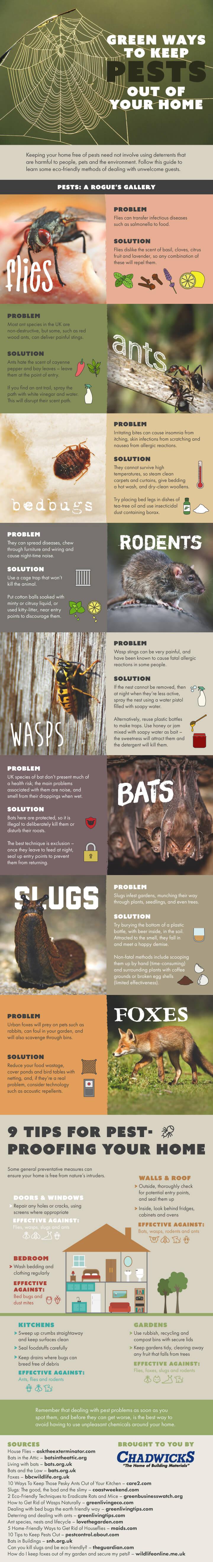 Cara Alami Menyingkirkan Serangga-Serangga Ini Dari Rumah - Infografis - BeliSewaRumah